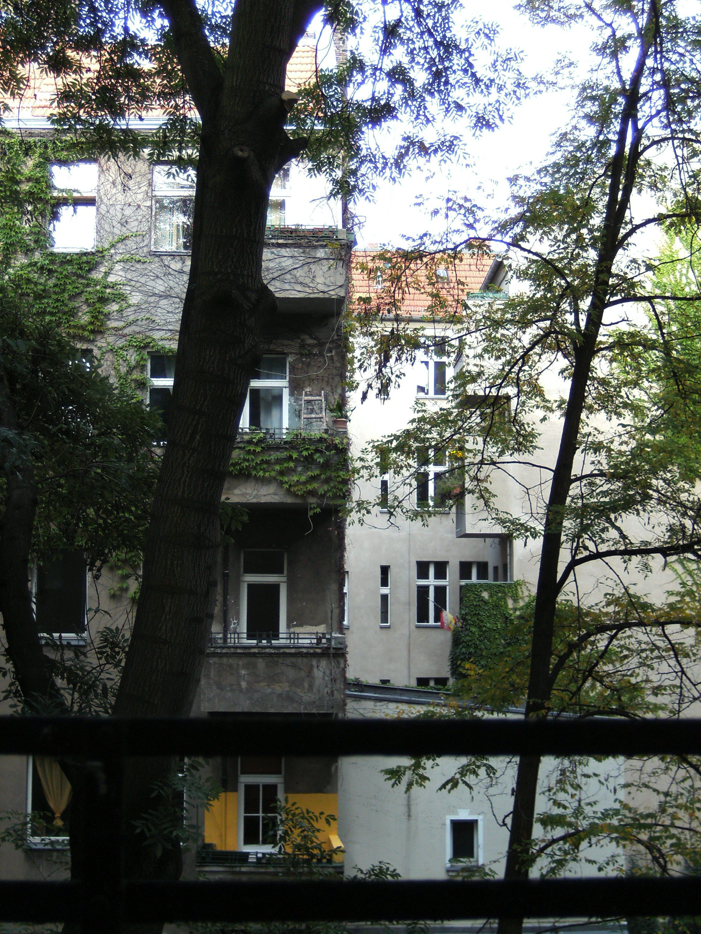 Baum_im_Hinterhofgedreht